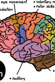 Afecţiuni ale sistemului nervos