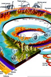 Evoluția vieții pe Terra