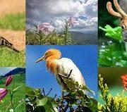 Fauna pe Glob